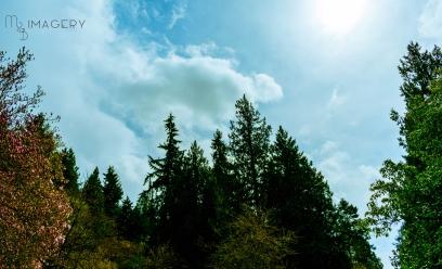 Arboreum, Sky Garden